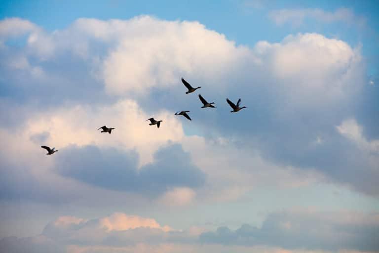 Wet Kwaliteitsborging: 4 tips voor aannemers om daaraan te voldoen